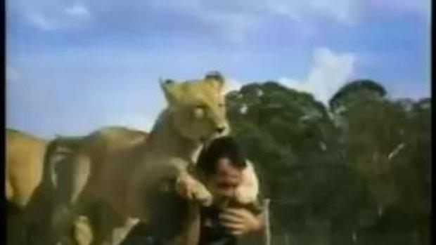 น่าทึ่ง!!! ความผูกพันของผู้ชายคนนี้เล่นกับสิงโต
