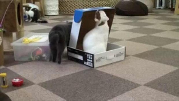 น้องเหมียว ซนแกล้งเพื่อน นั่งทับกล่องซะังั้น