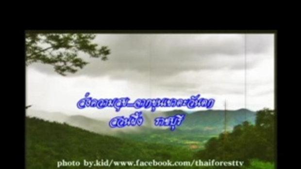 Earth Song สวนผึ้ง ราชบุรี