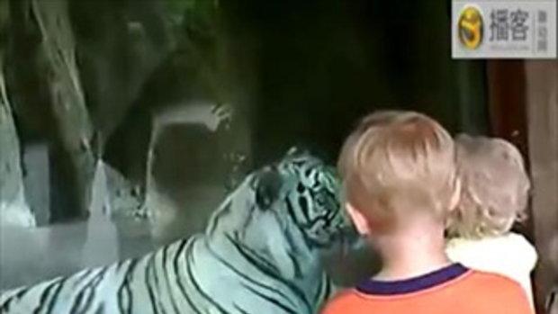 เด็กๆบอกว่า ก็แค่เสือ!! มันน่ากลัวตรงไหน