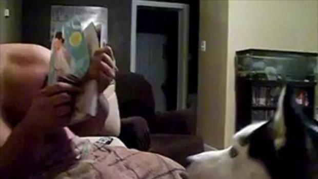 หมาเห็นหน้า จูเลีย โรเบิร์ต แล้ววิ่งหนี