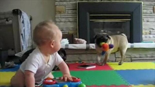 Pug vs. Baby   แย่งของเล่นกันทำใม^_^    by  sia.co.th