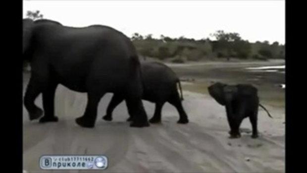 ลูกช้างโมโหคนถ่ายรูป