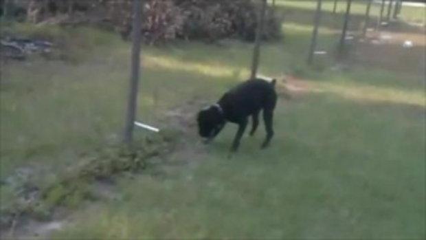 หมาฉี่ใส่รั้วไฟฟ้า สะดุ้งเลย