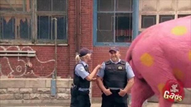 แกล้งคนฮาๆ ช้างสีชมพู