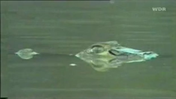 งูยักษ์อนาคอนด้า Vs ไคมาน จระเข้แห่งอเมซอน