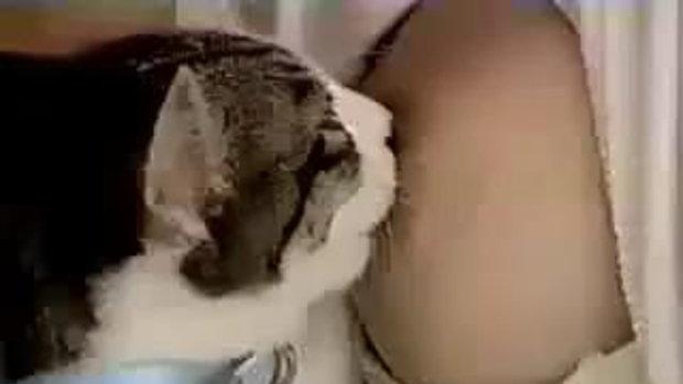 แมวดูดนมหญิงสาว