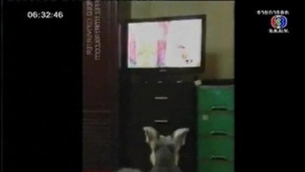 เจ้าลุง หมานั่งดูละคร ขุนศึก
