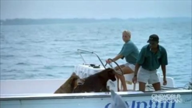 ภาพประทับใจ ปลาโลมาจูบกับหมากลางทะเล