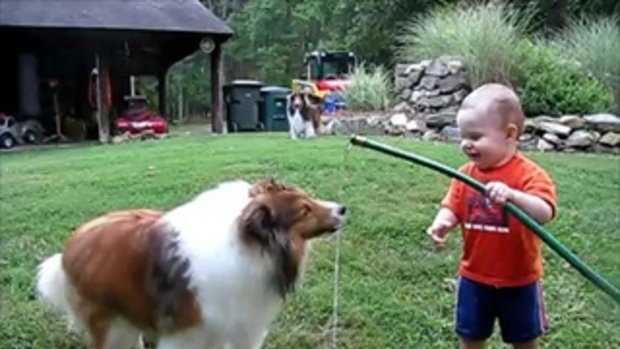 baby and dog play with hose   by  sia.co.th