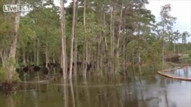 สหรัฐหลุมยักษ์โผล่ ลึกกว่า 400 ฟุต! ดูดกลืนต้นไม้หายไปในพริบตา