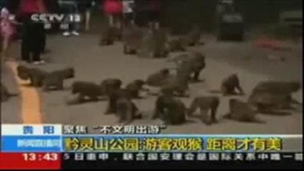 ลิงโหด กระชากอัณฑะเด็กไปกิน ที่สวนสัตว์จีน