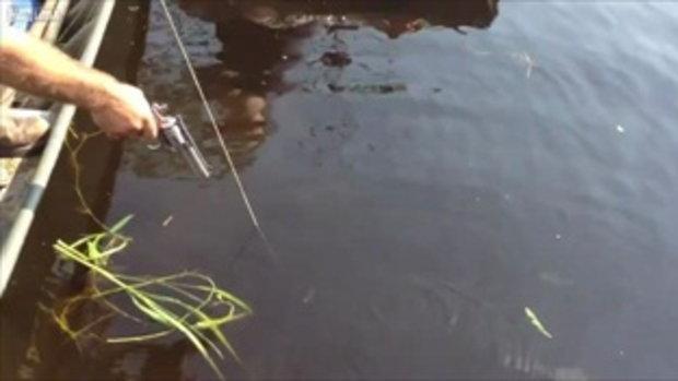 วินาทีล่าจับตาย! จระเข้ยักษ์ใน Sweet Lake