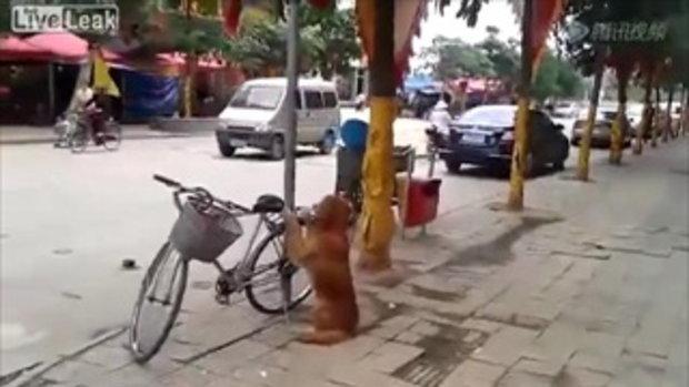 เจ้าตูบแสนรู้! สนใจให้ผมเฝ้าจักรยานให้มั้ยครับ
