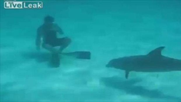 เจ้าปลาโลมาหื่นแสนขี้ตื้อ! ลวนลามผู้หญิงใต้น้ำ