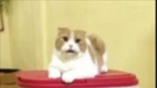 แมวสายโหด Ver.4