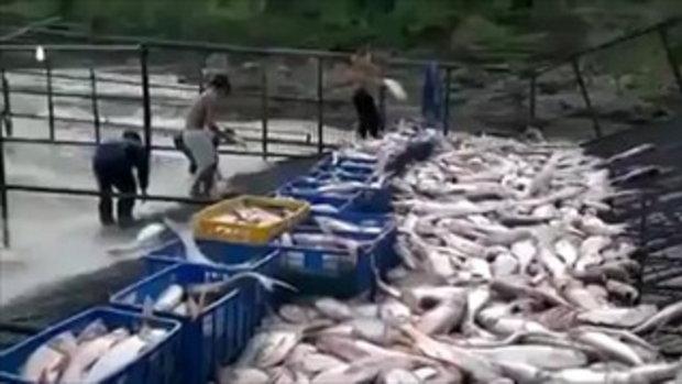 จับปลา 2 มือ !!