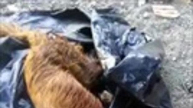 ใจเหี้ยม! จับหมาใส่ถุงดำมัดปากถุงแล้วโยนถังขยะ