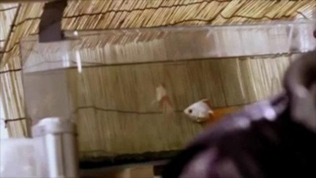 เหลือเชื่อ! วาดปลาลงในถ้วย แต่กลับมีชีวิตขึ้นมา