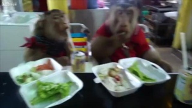 ลิงจอมป่วนขโมยข้าวเพื่อนกินเนียนเลยนะ