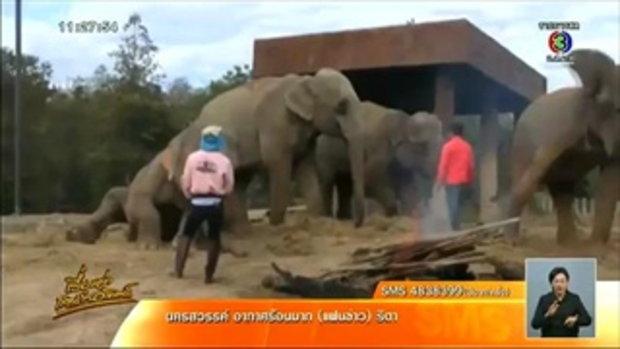 ช้างเชียงใหม่ไนท์ซาฟารีตื่นคนเตลิดวิ่งเหยียบคนดู บาดเจ็บ9ราย (15พ.ย.58)