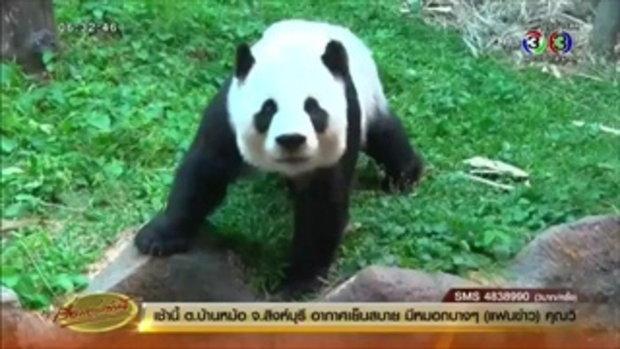 สวนสัตว์เชียงใหม่แถลง 'หลินฮุ่ย' แท้งลูกแพนด้า(18 พ.ย.58)