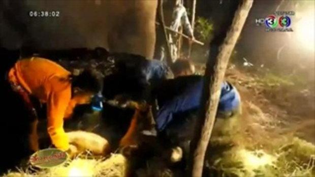 สวนสัตว์หัวหินฯ เฮ! 'พังน้องเอ๋' ตกลูกช้างพลาย หลังน้ำเดินมา3วัน (11ธ.ค.58)