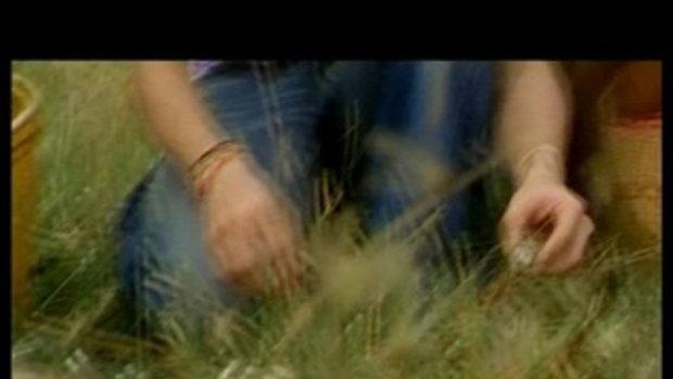 เพลง เก็บเห็ด - พี สะเดิด