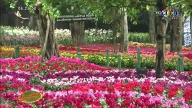 เชียงรายจัดเทศกาลดอกไม้งามรับฤดูหนาวต้อนรับ นทท. (23 ธ.ค.58)