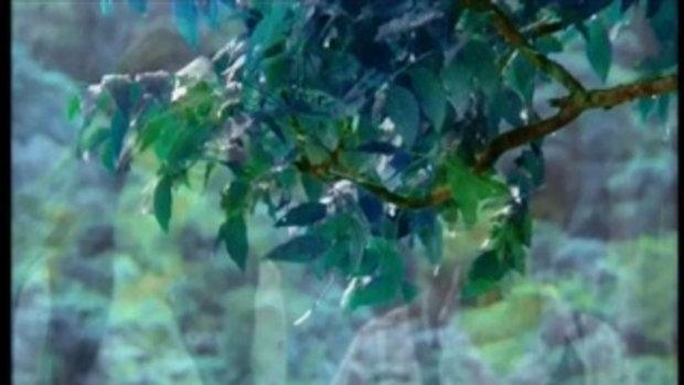 เพลง อีกครึ่งของฝัน - ไม้เมือง