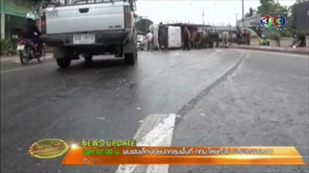 ฝนตกถนนลื่น รถบรรทุกวัวพลิกคว่ำ เทกระจาด เจ็บหลายตัว (16 ก.ย.58)