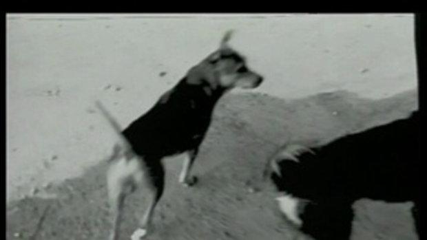 เพลง บุษบา - Moderndog
