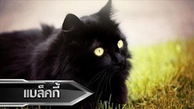 TOP5 5 อันดับสัตว์เลี้ยงที่รวยที่สุดในโลก !!