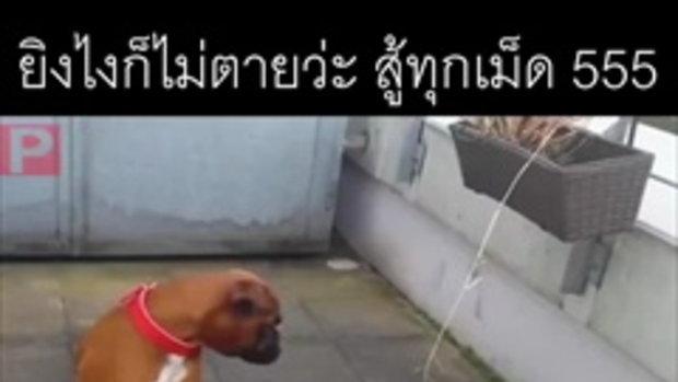 วิธีกินน้ำแบบโหด เร็วแค่ไหนรับกินได้หมด หมาเป็นสัตว์ปัญญาอ่อน