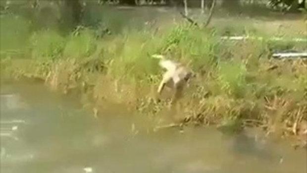 เจ้าตูบ สุนัขกระโดดน้ำที่เก่งที่สุด ฮาน้ำตาไหล !!!