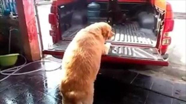 เจ้าหมา บอกแล้วไงว่าอย่ากินเยอะติดพุงเลย !!!