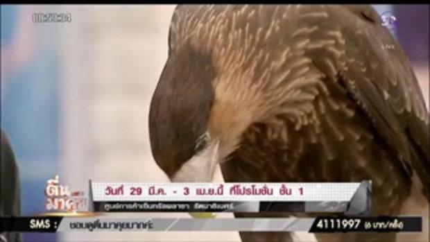 มหัศจรรย์สัตว์ปีก ผีเสื้อกว่า 3,000 ตัว และนกสายพันธุ์หาชมยาก!