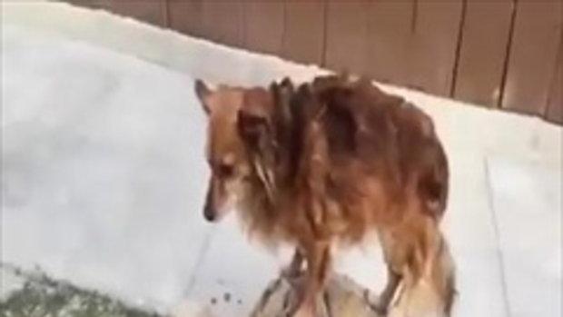 เพื่อนรักต่างสายพันธุ์ หมาขี่รถเต่า