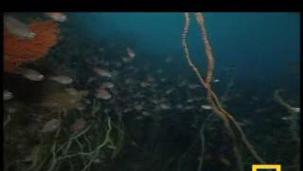 สิ่งมีชีวิตอันน่าทึ่งใต้ท้องทะเลลึก