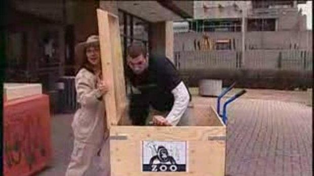 แกล้งคน กอริลลา ในกล่อง