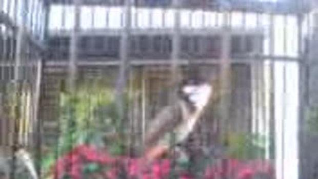 นกชื่อตัวเล็ก 1