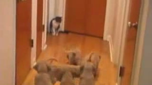 Puppy & Cat