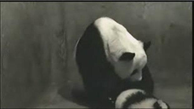 หลินฮุ่ยเล่นกับหลินปิง