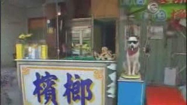 หมาแสนรู้ที่จีน