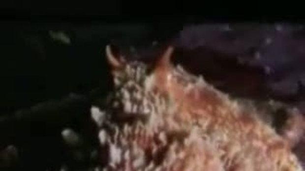 ปลาหมึกกินปลาฉลาม