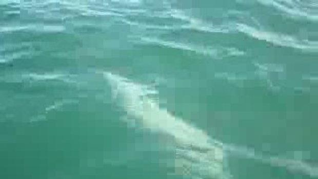 กีฬา สุดแปลกแข่งตกปลาฉลาม