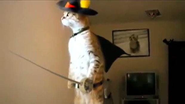 แมวยืนได้ น่ารักดี
