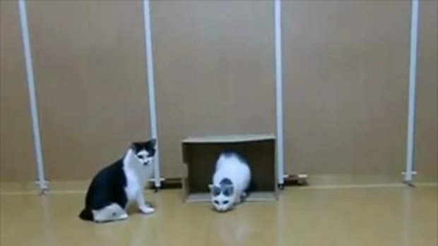 บอลโลกฟีเว่อร์ แม้แต่แมว ก็ไม่เว้น!!!