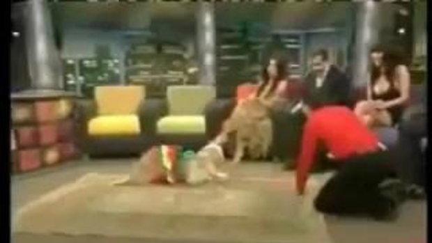 อีกครั้ง! สุนัขเต้นเก่งมาก