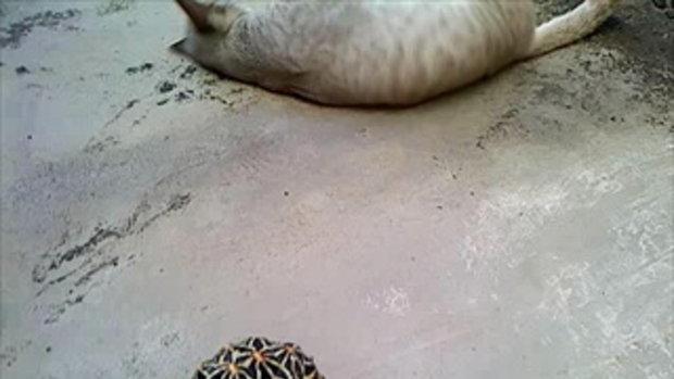 แมวกับเต่า ภาค 2